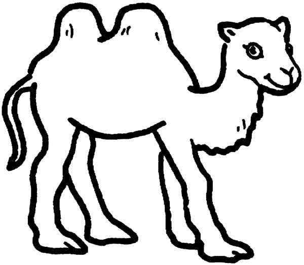 Bactria Camel Is Smiling Coloring Pages