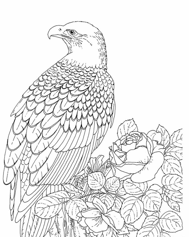 Bald Eagle Coloring Pages For Adults