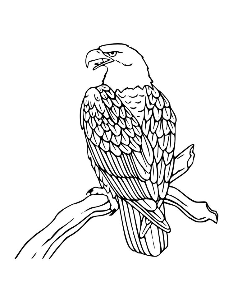 Bald Eagle Coloring Pages Perched