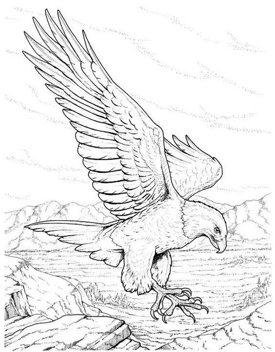 Bald Eagle Coloring Pages Realistic