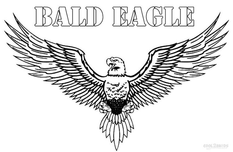 Bald Eagle Coloring Pages Wingspan