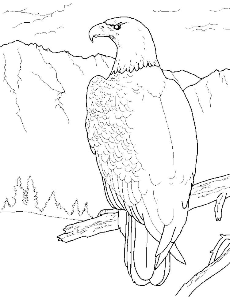 Bald eagle perched coloring pages