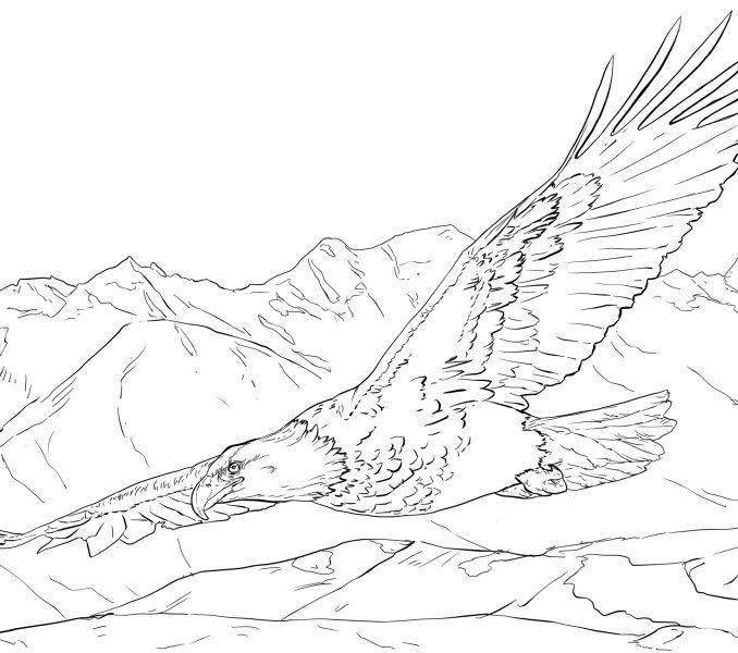 Bald Eagle Wingspan Coloring Pages