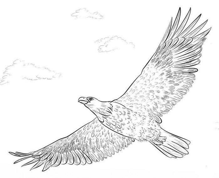 Bald Eagles Coloring Pages