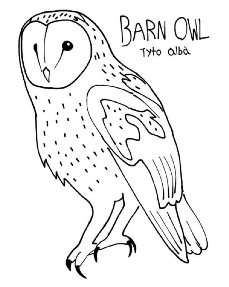 Barn Owl Coloring Pages