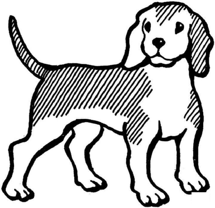 Beagle Dog Coloring Pages