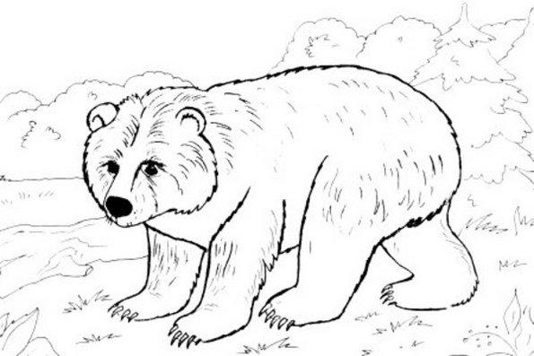 Bear Winter Animal Print Out Drawing