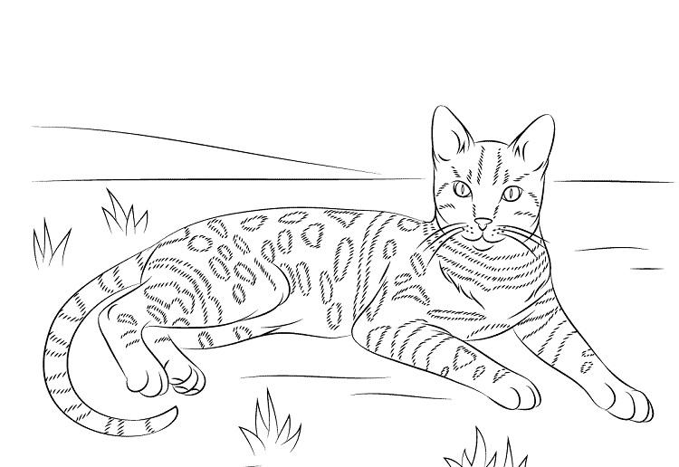Bengal Cat Coloring Pages