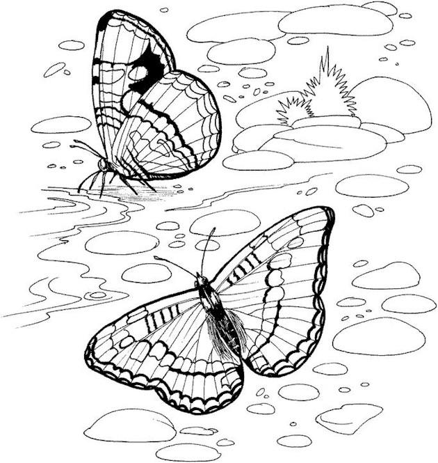 Best Adult Coloring Pages Printable Butterfly 1