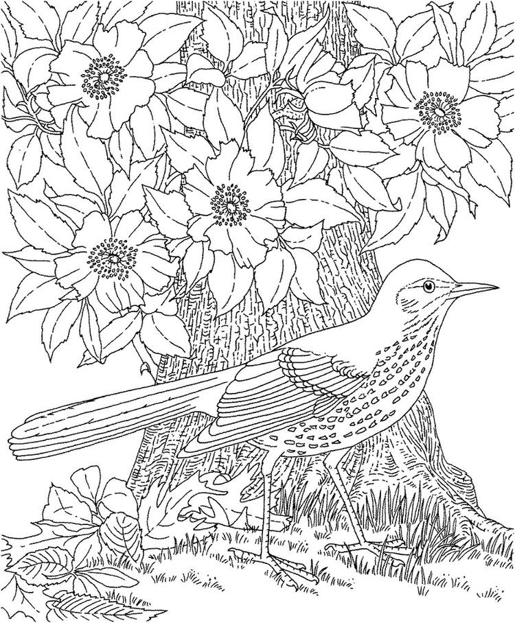 Best Free Printable Adult Coloring Pages 4