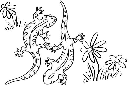Best Gecko Coloring Page For Children