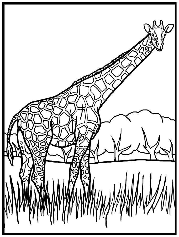 Best Giraffe Coloring Pages
