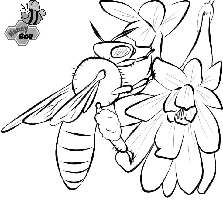 Best Honey Bee Coloring Page For Kids 1