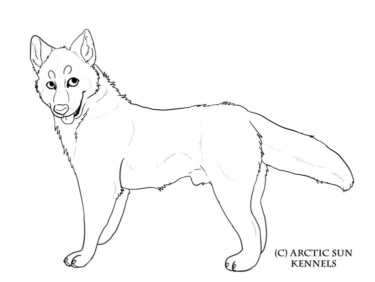 Best Realistic Husky Coloring Pages 1