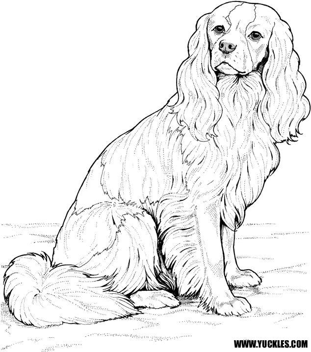 Best Realistic Husky Coloring Pages