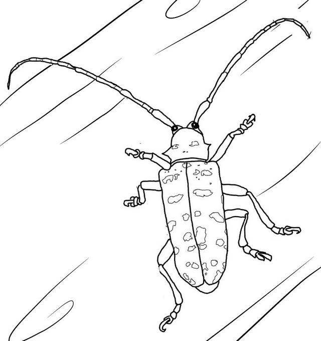Best Titan Beetle Coloring Page