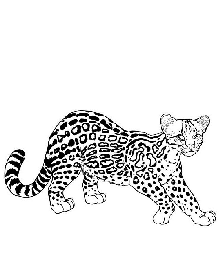 Big Cat Coloring Pages