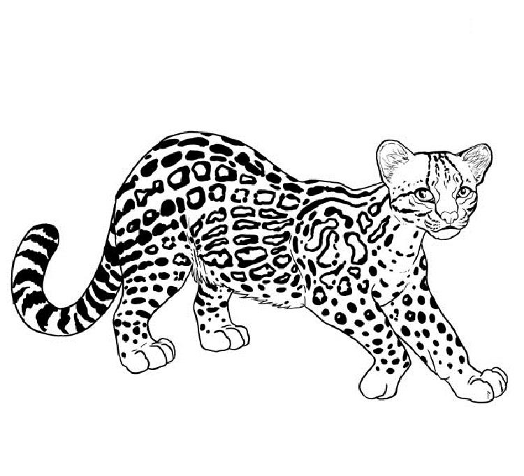 Big cat rescue coloring pages