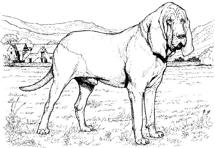 Big Realistic Dog Coloring Pages