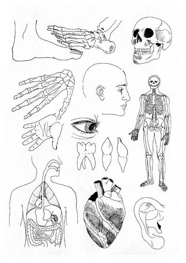 Biology Lesson Human Anatomy Coloring Pages