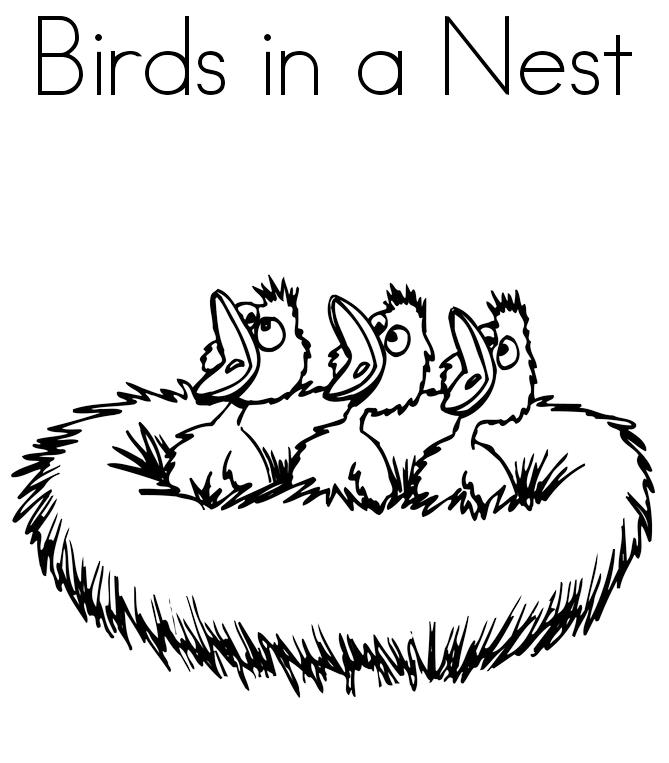 Bird Babies In A Nest Coloring Book