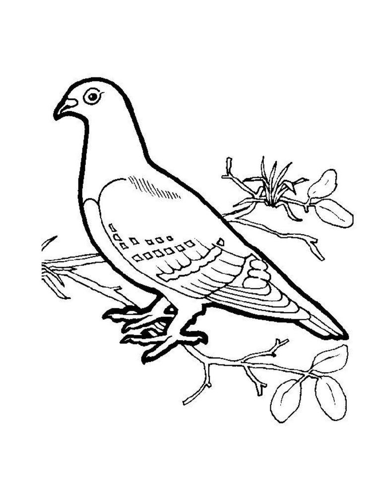 Bird Coloring Page Dove
