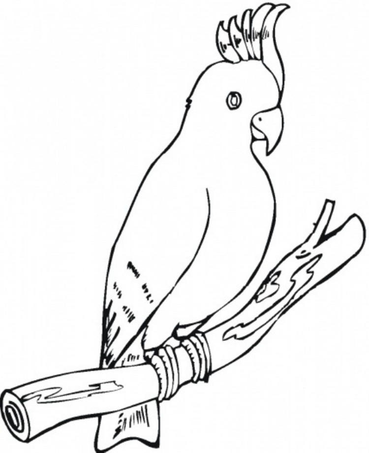 Bird Coloring Page Parrot Free
