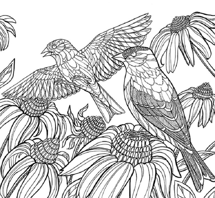 Bird Coloring Pages Cornell