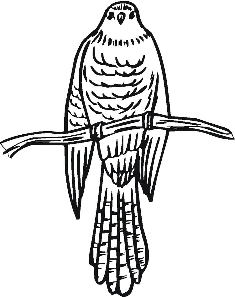 Bird Coloring Pages Falcon On The Tree