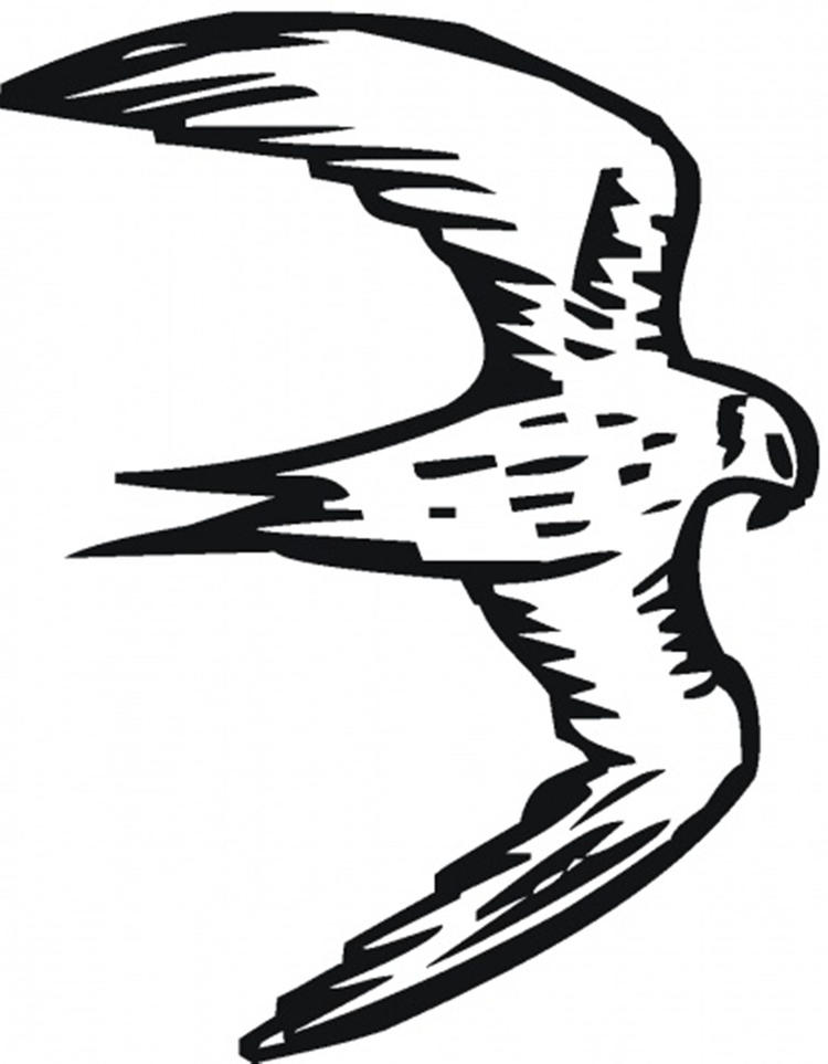 Bird Coloring Pages Flying Falcon