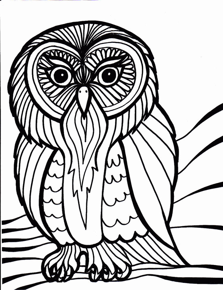 Bird Coloring Pages Owl