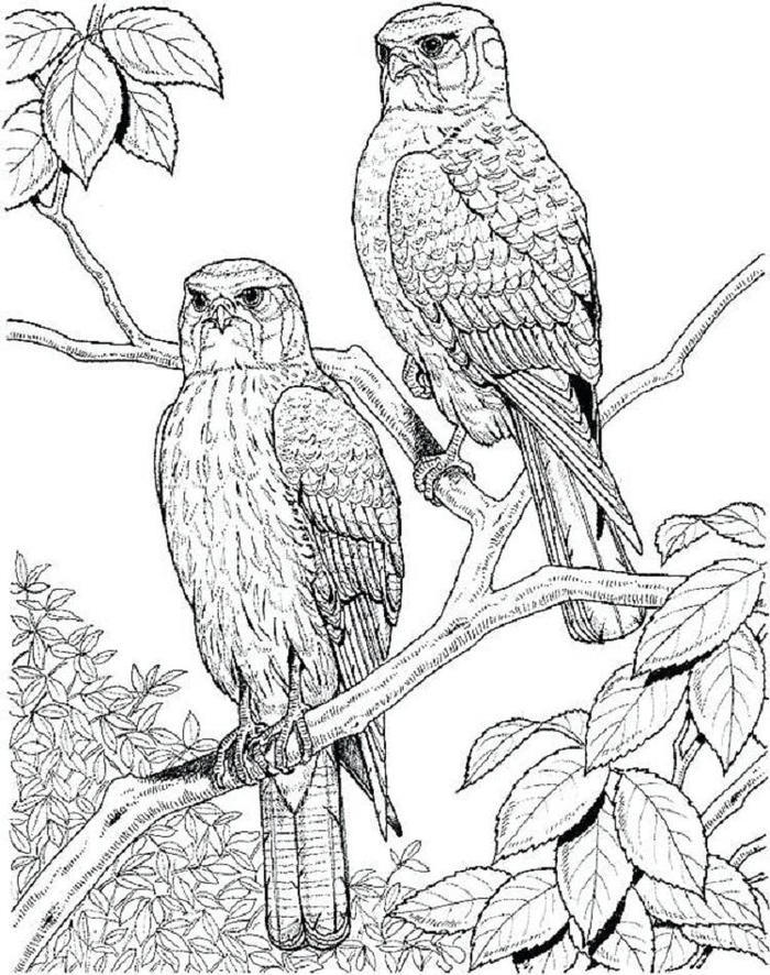 Bird Coloring Pages Pdf