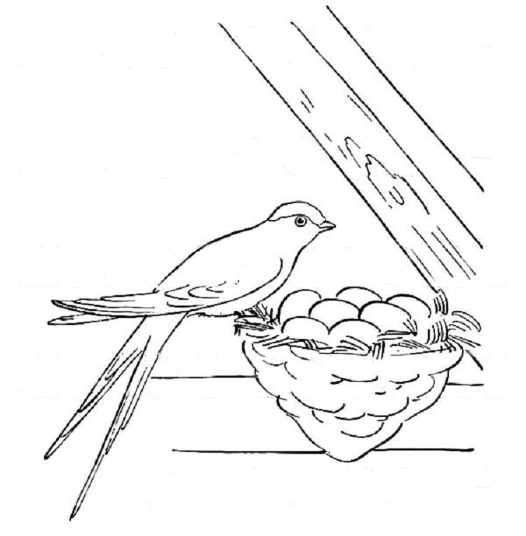 Bird Egg Coloring Page