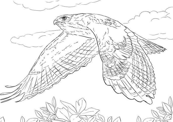 Bird Of Prey Coloring Pages