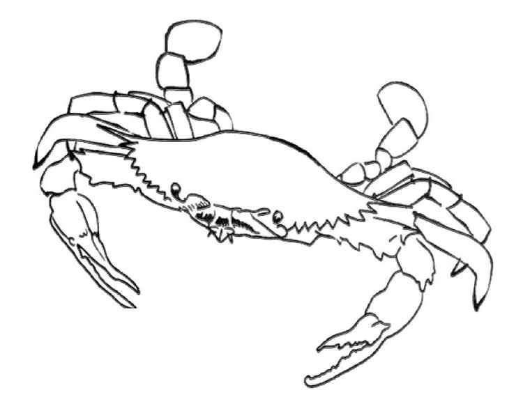 Blue Crab Coloring Pages Printable
