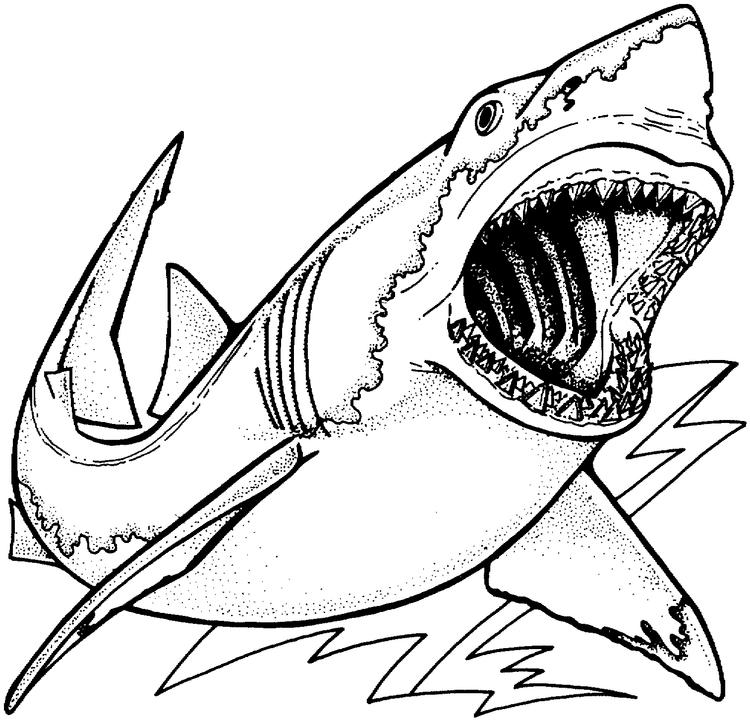 Boy Coloring Pages Shark