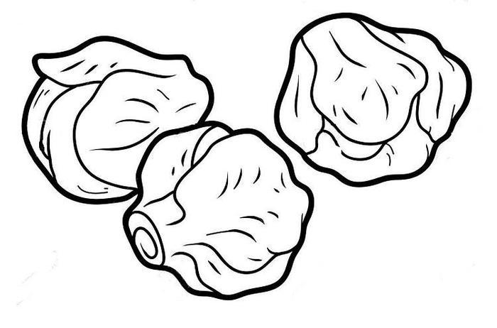 Brussles Sprouts Vegetables Coloring Pages
