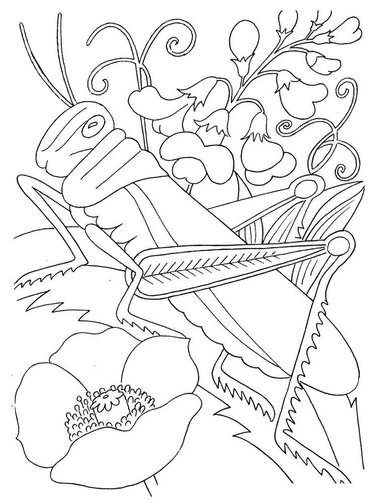 Bug Coloring Pages Grasshopper And Flowers