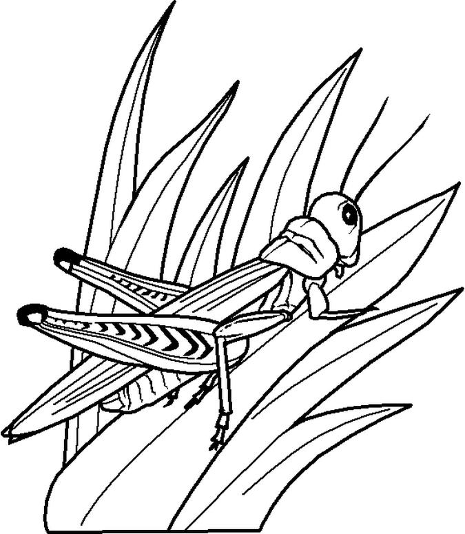 Bug Coloring Pages Grasshopper On Grass
