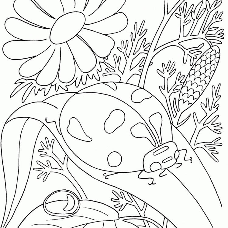 Bug Coloring Pages Ladybug And Flower