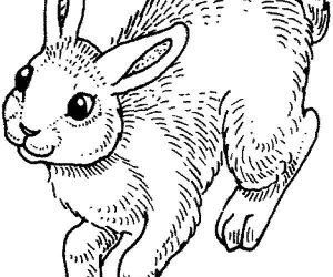 Bunny coloring pages hopping