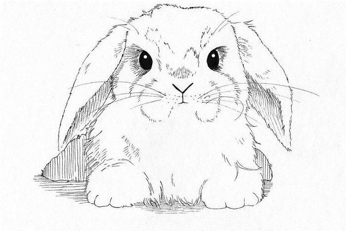 Bunny Rabbit Coloring Pages 1