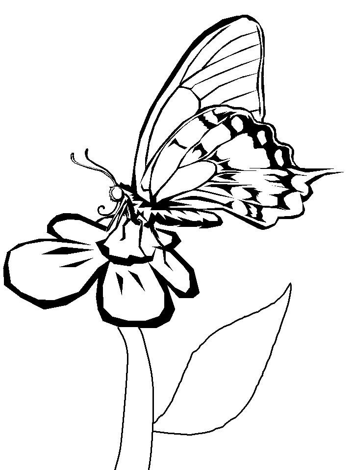 Butterfly And Flower Coloring Pages For Kids