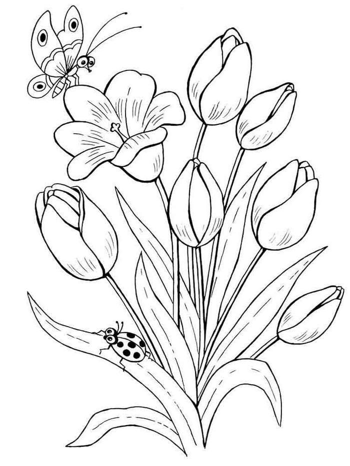 Butterfly and ladybug coloring pages