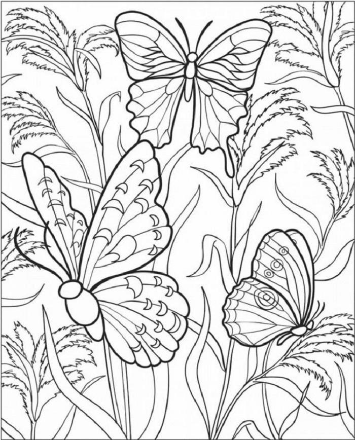 Butterfly Coloring Pages For Teenagers