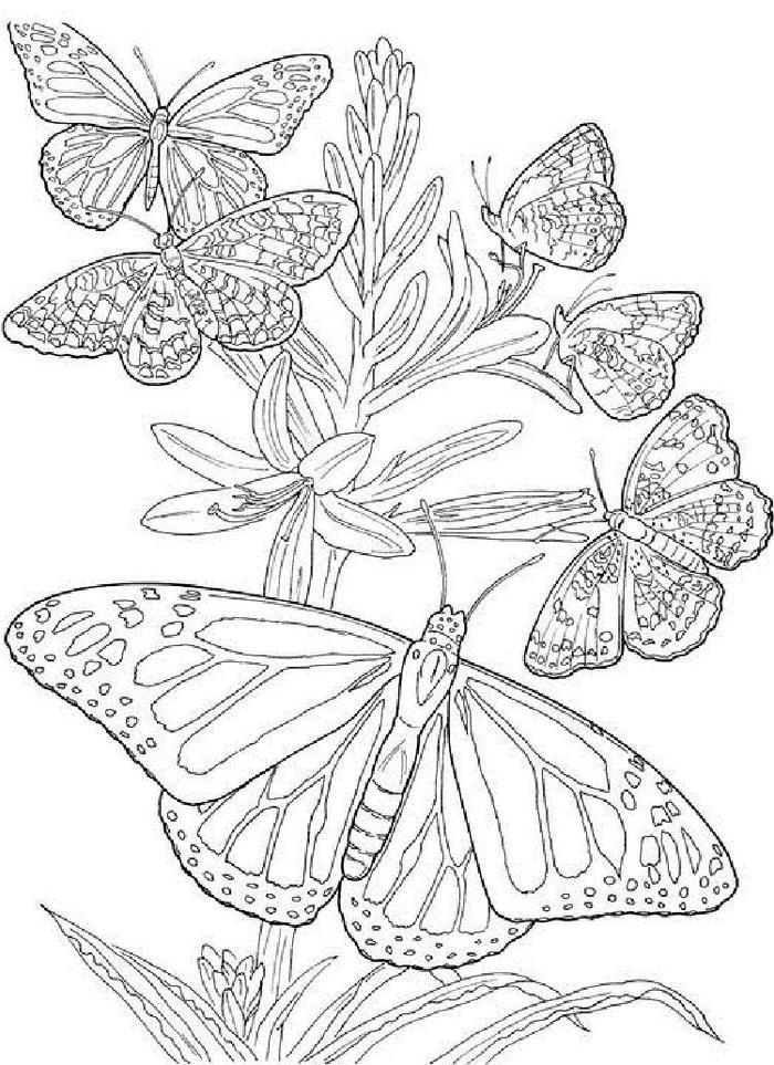 Butterfly Coloring Pages Online