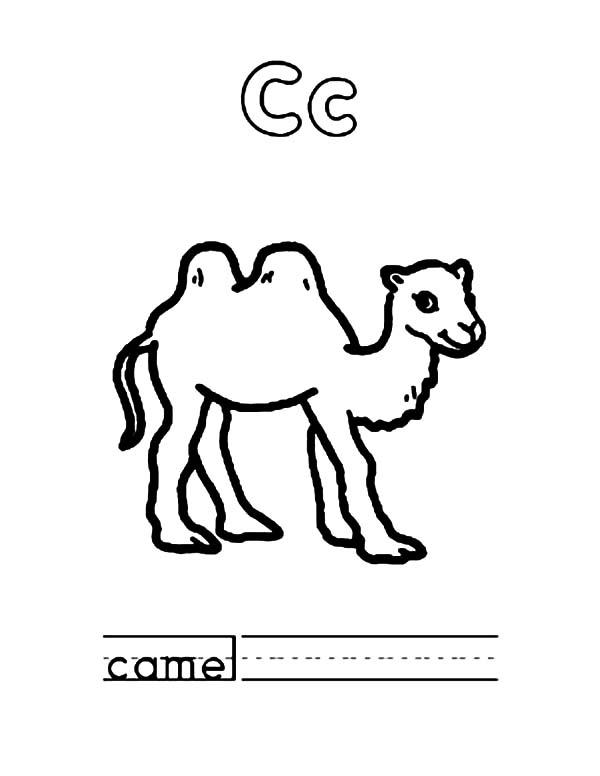 C Is For Bactria Camel Coloring Pages