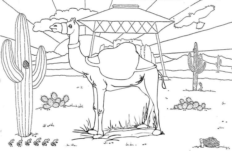 Camel With Desert And Cacti Landscape Coloring Pages