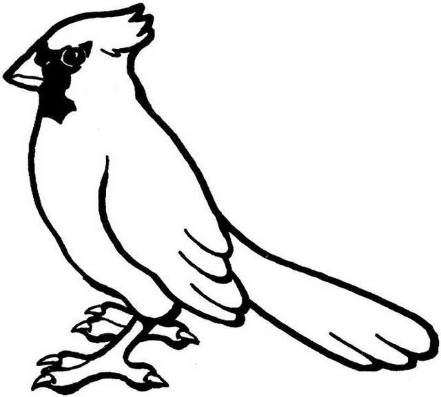 Cardinal Coloring Picture For Beginners