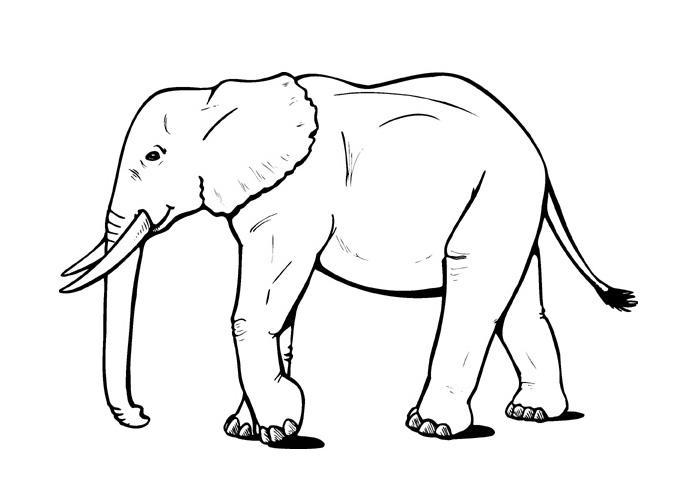 Cartoon Elephant Coloring Pages Cartoon Coloring Pages 1